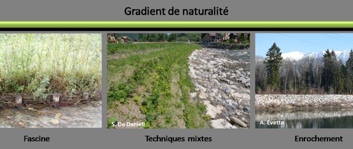 Restauration de la trame verte et bleue sur les berges de cours d'eau par les techniques de génie végétal – Travaux 2017 (Irstea)