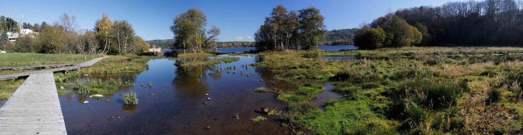 Zone humide restaurée sur le Lac d'Aydat (63) - Crédit : A.MATHEVON