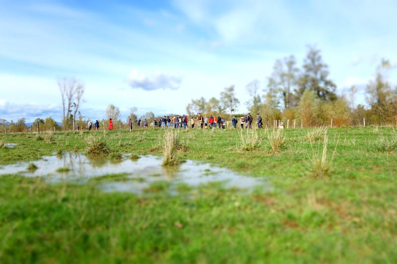 Visite de terrain de la zone humide de la Sauzaye - Octobre 2020